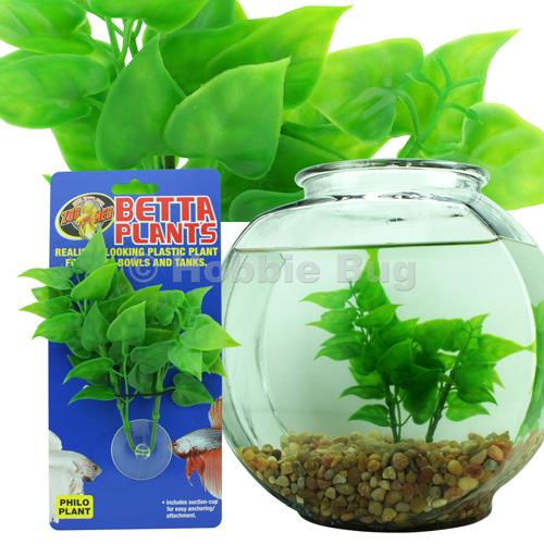 Zoo med betta fish plants aquarium freshwater fish tank for Betta fish and plants