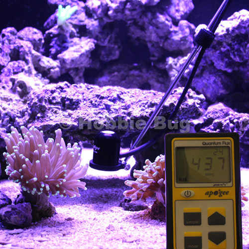 24 Programmable Hard Sps Lps Soft Coral Reef Aquarium